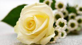 rose-3159554_1920